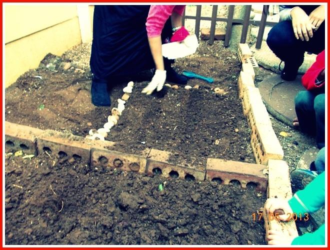 Vegetable garden kinder college in alberton new redruth for Extra mural program
